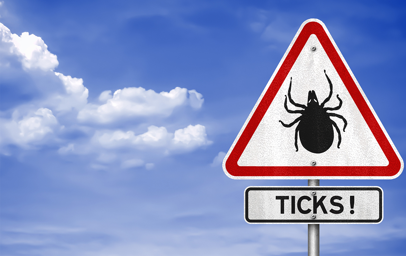 Avoid Tick Bites This Summer